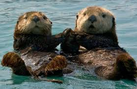 otters.jpeg